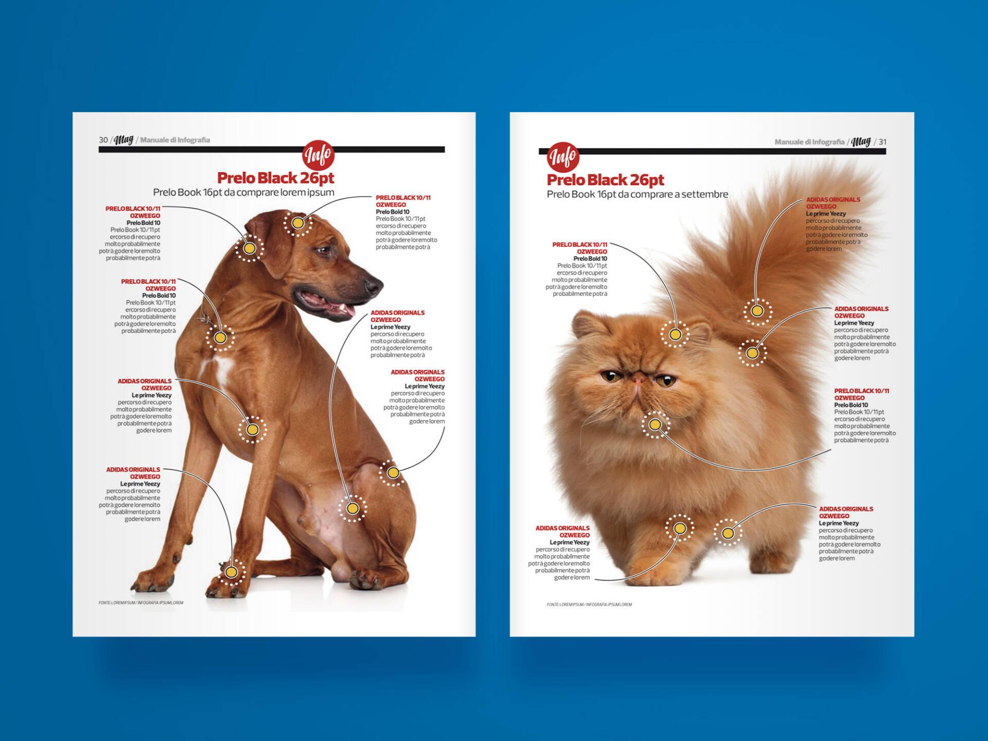 MAG_infographics_03_Wenceslau_News_Design